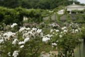http://gardenpanorama.cz/wp-content/uploads/Charlottenhof-2-170x115.jpg