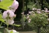 http://gardenpanorama.cz/wp-content/uploads/Charlottenhof-7-170x115.jpg