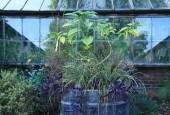 http://gardenpanorama.cz/wp-content/uploads/Chelsea_Physic_GardenIMG_9648_006-170x115.jpg