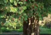 http://gardenpanorama.cz/wp-content/uploads/Chelsea_Physic_GardenIMG_9662_017-170x115.jpg