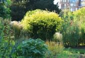 http://gardenpanorama.cz/wp-content/uploads/Chelsea_Physic_GardenIMG_9688_009-170x115.jpg