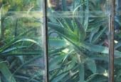 http://gardenpanorama.cz/wp-content/uploads/Chelsea_Physic_GardenIMG_9710_013-170x115.jpg