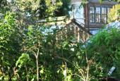 http://gardenpanorama.cz/wp-content/uploads/Chelsea_Physic_GardenIMG_9738_014-170x115.jpg
