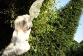 http://gardenpanorama.cz/wp-content/uploads/DSC09679-170x115.jpg