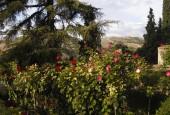 http://gardenpanorama.cz/wp-content/uploads/DSCN0447_1-170x115.jpg