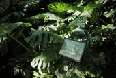 http://gardenpanorama.cz/wp-content/uploads/DSCN0628-170x115.jpg