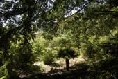 http://gardenpanorama.cz/wp-content/uploads/DSCN0716-170x115.jpg