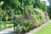 http://gardenpanorama.cz/wp-content/uploads/DSCN0880-170x115.jpg