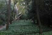 http://gardenpanorama.cz/wp-content/uploads/DSCN9609-170x115.jpg