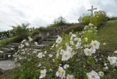 http://gardenpanorama.cz/wp-content/uploads/DSC_0342-170x115.jpg