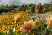 http://gardenpanorama.cz/wp-content/uploads/DSC_0364-170x115.jpg