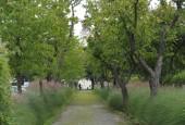 http://gardenpanorama.cz/wp-content/uploads/DSC_0389-170x115.jpg