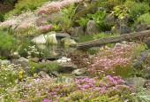 http://gardenpanorama.cz/wp-content/uploads/DSF0665-170x115.jpg