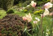http://gardenpanorama.cz/wp-content/uploads/DSF0672-170x115.jpg