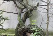 http://gardenpanorama.cz/wp-content/uploads/DSF0705-e1369775293414-170x115.jpg