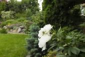 http://gardenpanorama.cz/wp-content/uploads/DSF1041-170x115.jpg