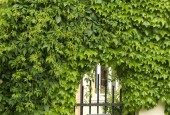 http://gardenpanorama.cz/wp-content/uploads/DSF1046-170x115.jpg