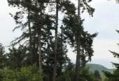 http://gardenpanorama.cz/wp-content/uploads/DSF1056-e1372270194325-170x115.jpg
