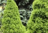 http://gardenpanorama.cz/wp-content/uploads/DSF1081-170x115.jpg