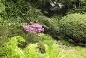 http://gardenpanorama.cz/wp-content/uploads/DSF1089-170x115.jpg