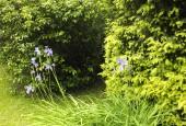 http://gardenpanorama.cz/wp-content/uploads/DSF1090-170x115.jpg