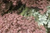 http://gardenpanorama.cz/wp-content/uploads/DSF1109-170x115.jpg