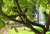 http://gardenpanorama.cz/wp-content/uploads/IMG_0119-170x115.jpg