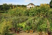 http://gardenpanorama.cz/wp-content/uploads/IMG_0146-170x115.jpg