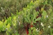 http://gardenpanorama.cz/wp-content/uploads/IMG_0152-170x115.jpg