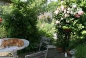 http://gardenpanorama.cz/wp-content/uploads/IMG_0580-170x115.jpg