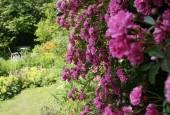 http://gardenpanorama.cz/wp-content/uploads/IMG_0604-170x115.jpg