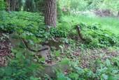 http://gardenpanorama.cz/wp-content/uploads/IMG_1462-170x115.jpg