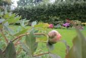 http://gardenpanorama.cz/wp-content/uploads/IMG_1490-170x115.jpg
