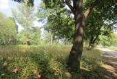 http://gardenpanorama.cz/wp-content/uploads/IMG_2034-170x115.jpg
