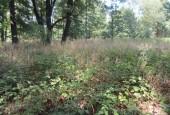http://gardenpanorama.cz/wp-content/uploads/IMG_2035-170x115.jpg