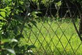 http://gardenpanorama.cz/wp-content/uploads/IMG_7129-170x115.jpg