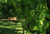 http://gardenpanorama.cz/wp-content/uploads/IMG_7141-170x115.jpg