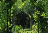 http://gardenpanorama.cz/wp-content/uploads/IMG_7149-170x115.jpg