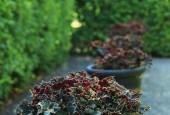 http://gardenpanorama.cz/wp-content/uploads/IMG_7155-170x115.jpg