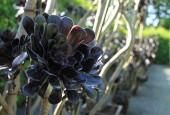 http://gardenpanorama.cz/wp-content/uploads/IMG_7161-170x115.jpg
