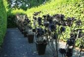 http://gardenpanorama.cz/wp-content/uploads/IMG_7167-170x115.jpg