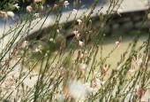 http://gardenpanorama.cz/wp-content/uploads/IMG_7185-170x115.jpg