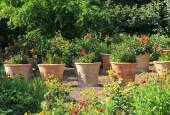 http://gardenpanorama.cz/wp-content/uploads/IMG_7198-170x115.jpg
