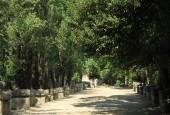 http://gardenpanorama.cz/wp-content/uploads/IMG_7411-170x115.jpg