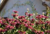 http://gardenpanorama.cz/wp-content/uploads/IMG_8717-170x115.jpg