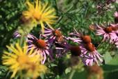 http://gardenpanorama.cz/wp-content/uploads/IMG_8718-170x115.jpg