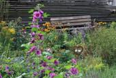 http://gardenpanorama.cz/wp-content/uploads/IMG_8725-170x115.jpg