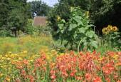 http://gardenpanorama.cz/wp-content/uploads/IMG_8728-170x115.jpg