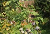 http://gardenpanorama.cz/wp-content/uploads/IMG_8731-170x115.jpg