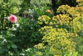 http://gardenpanorama.cz/wp-content/uploads/IMG_8733-170x115.jpg